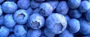 cropped-blueberries.jpeg